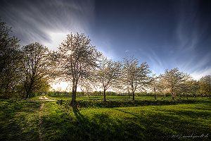 Kirschblüte - 1200 x 800 - 499kB